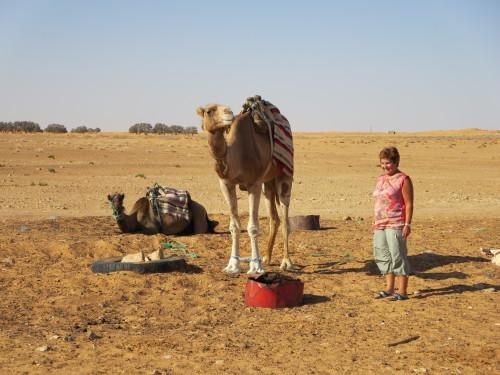 acho é que o camelo não quer mais conversas....