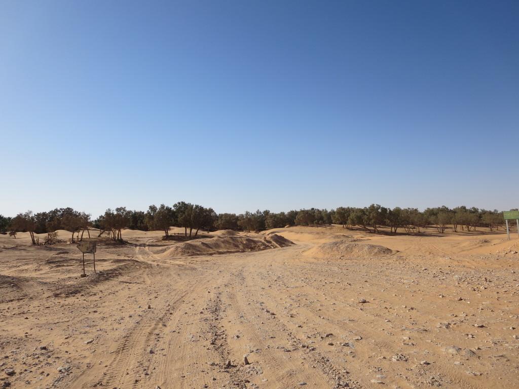 pernoitámos aqui pois na continuação deste caminho , a seguir à curva , passa a ser apenas areia solta......nada próprio para a estrelita !!!