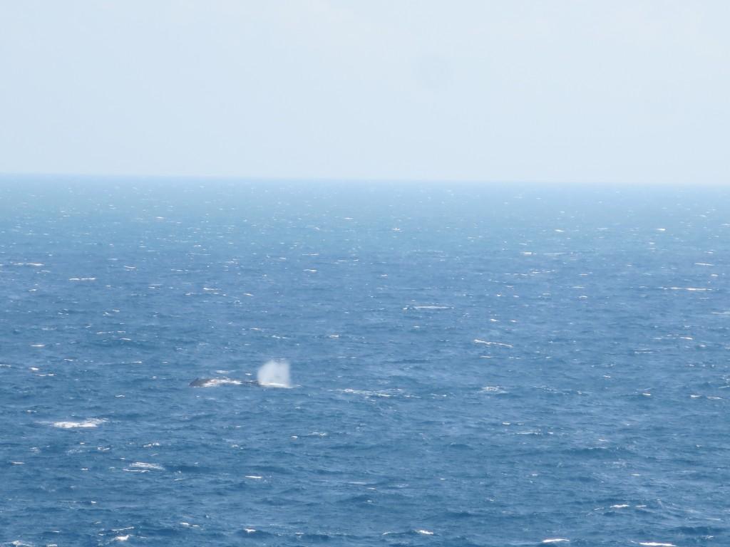 mal se vê mas garanto que é uma baleia !!!