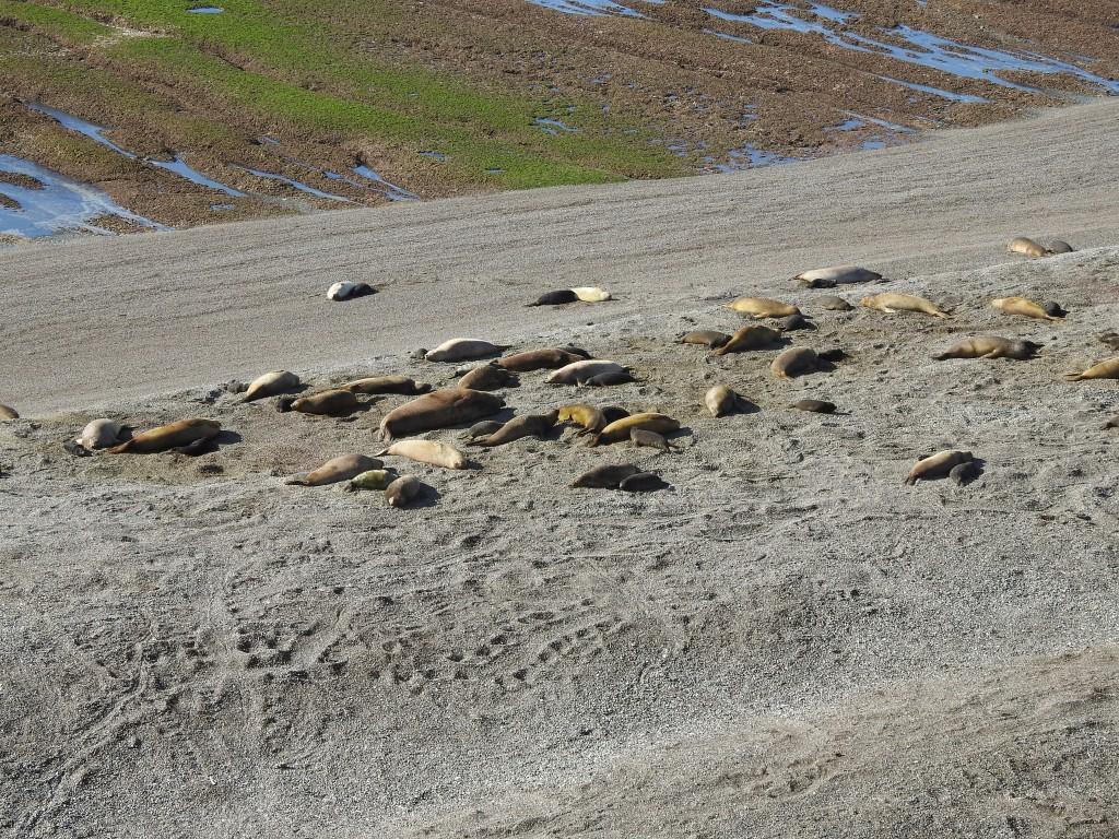 podiam-se admirar vários grupos como este ao longo da praia