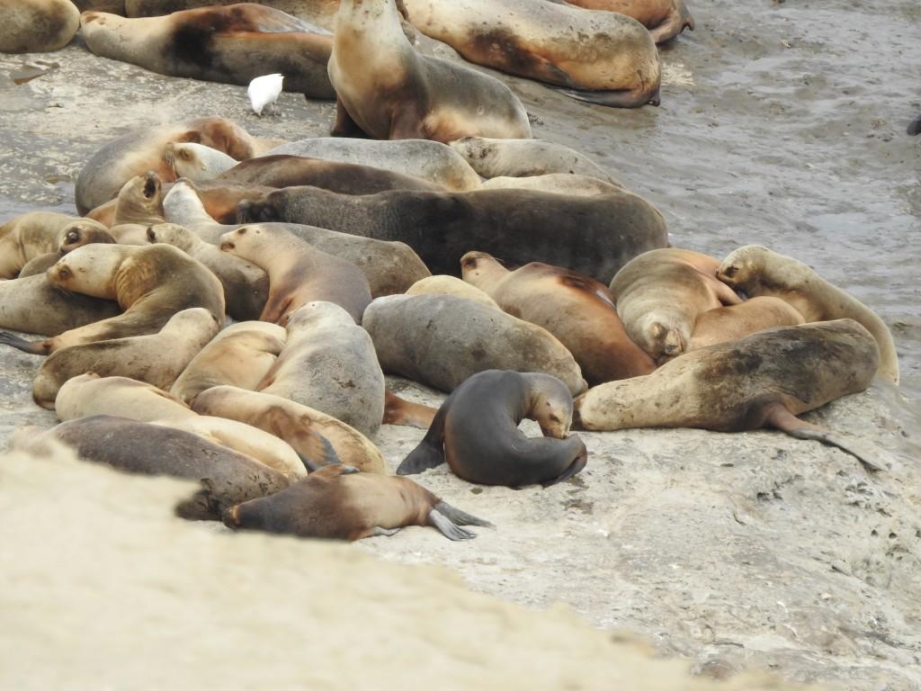 um macho normalmente vive rodeado de 15 a 20 fêmeas !!!