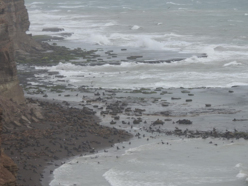 noutro local da costa , em PUNTA BERMEJA , pudemos admirar uma enorme colónia deles