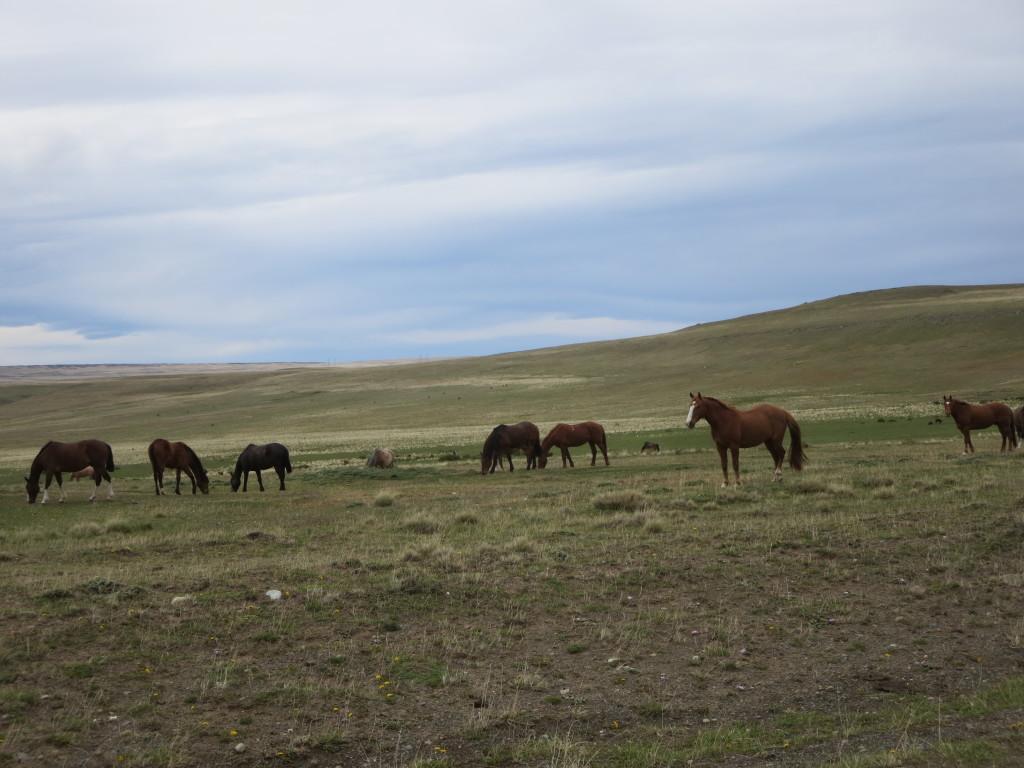 não conseguimos passar um dia sem ver cavalos !!!