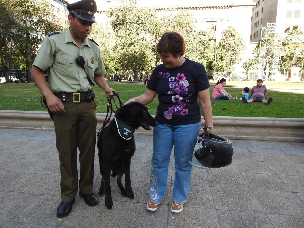a Marilia vê um cão e perde-se.....