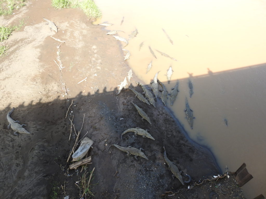 há no interior do país uma ponte muito conhecida de onde se podem avistar constantemente dezenas de enorme crocodilos....