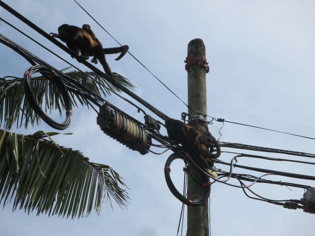 há muitos ti+os de macacos por todo o lado....